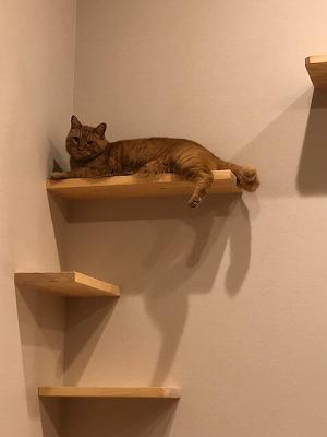 奈良の木の家、奈良の工務店、猫ちゃんハウス、猫と暮す