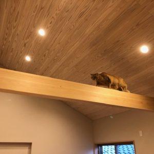 奈良の木の家 猫と暮す平野木材