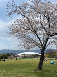 奈良木の家、奈良注文住宅、奈良で家を建てるなら、ならの工務店、信頼できる、お花見、馬美丘陵公園