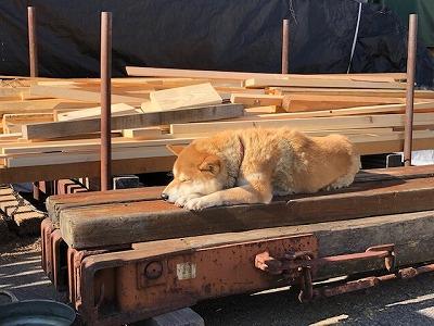 奈良愛犬の木のベッド平野木材