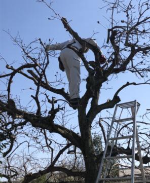 奈良で木の手入れなら平野木材