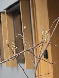 奈良で植栽なら平野木材