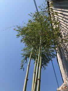 奈良で平屋地鎮祭なら平野木材