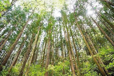 奈良で木の効果なら平野木材