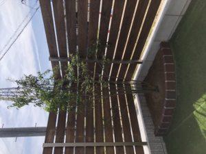 奈良で木の家で緑のある暮らしなら平野木材